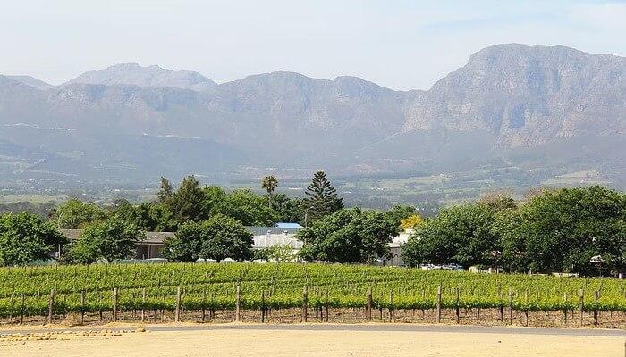 Take a wine tour on horseback