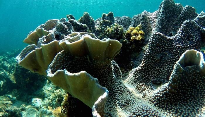Underwater Attractions of Maldives