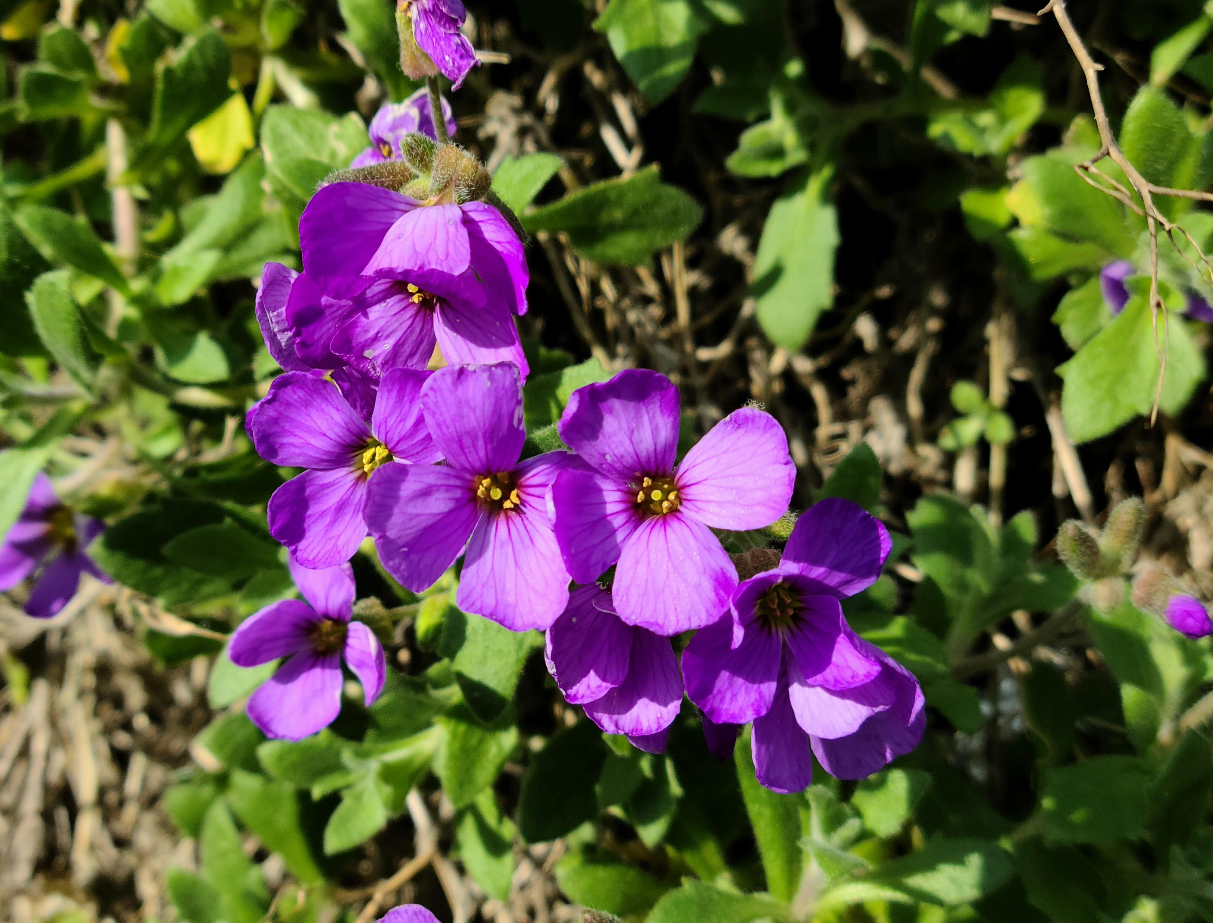 flowers-64mp-crop