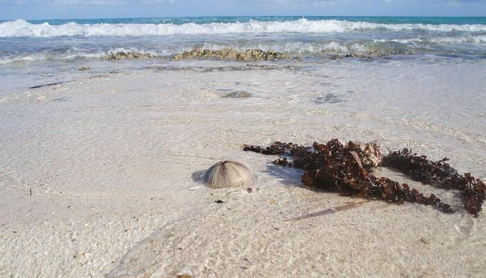 Mummy bay beach