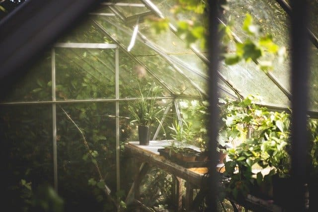 Gardening Benefit 8 Mindfulness
