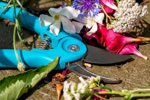 3 Verwenden Sie immer scharfe Werkzeuge, wenn Sie Ihre Pflanzen zurückschneiden