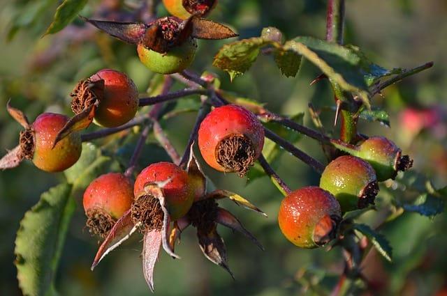 2 Während altes Laub im Herbst weggeräumt werden kann
