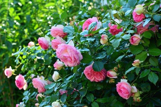 5 Wenn Sie Ihre Pflanzen richtig kürzen und pflegen, bleiben sie gesund