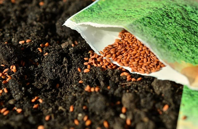 3 Seeds are best sown in their final position