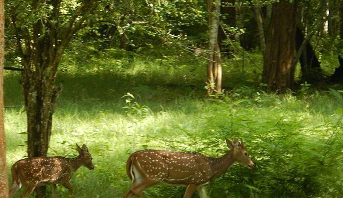 See the wildlife experience in the park
