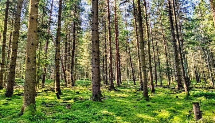 Mawfalong Holy Forest