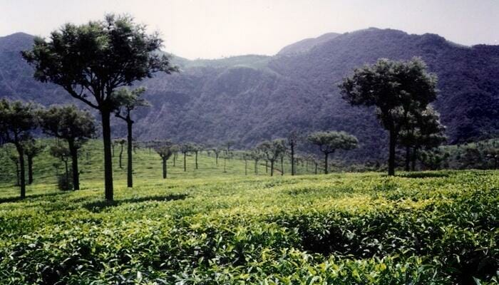 Look for offbeat places to visit Ooty and then visit Tea Park