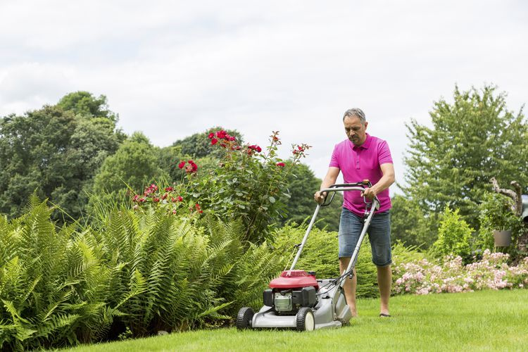 8 Best Push Lawn Mowers of 2020