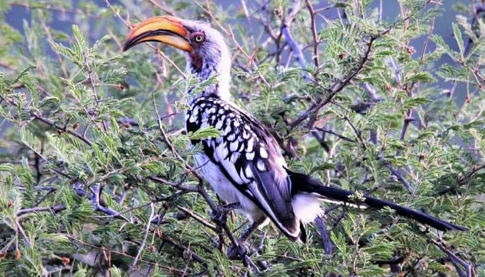 Bhimgarh Wildlife Sanctuary