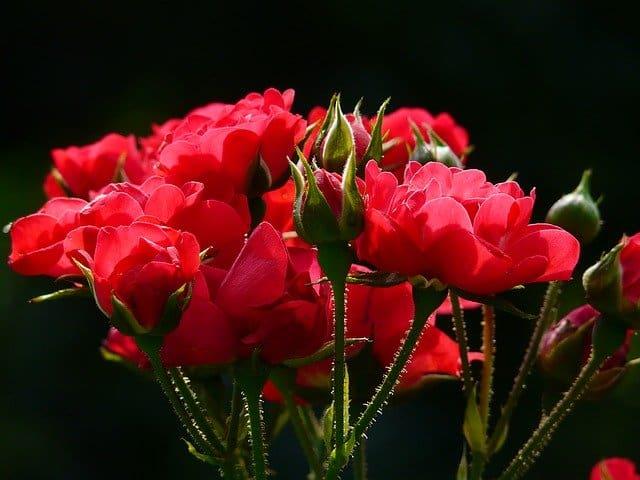1 Ein Grundnahrungsmittel des Blumengartens