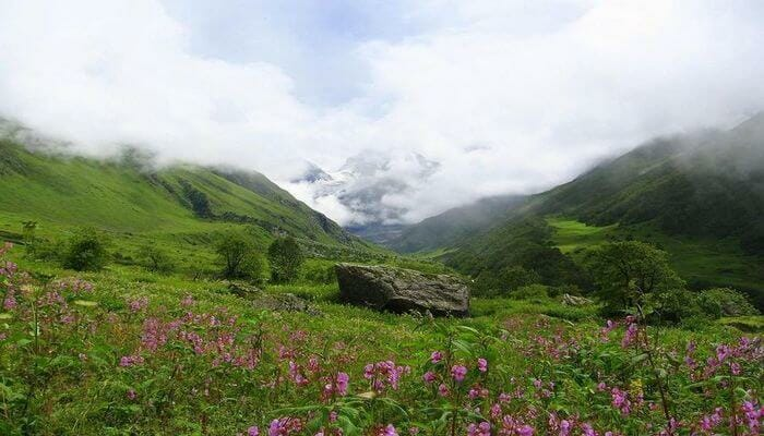 Valley of Flowers - Places to Visit in Uttarakhand