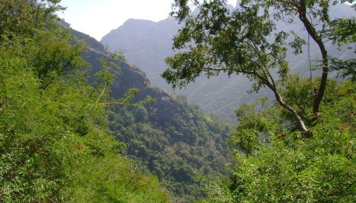 lush-green hillock