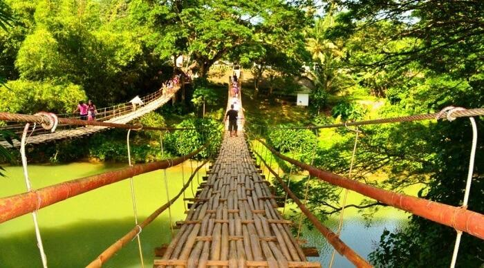 Walk across the Bamboo Hanging Bridge in the Philippines