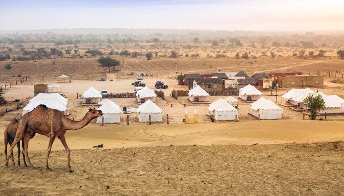 Pushkar Camping Experience