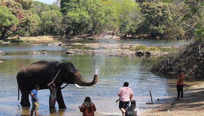 Dabare Elephant Camp