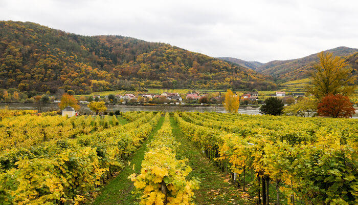 Become a part of Danube Wine Tour