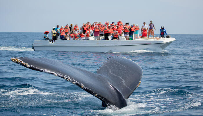 Go on a boat to see whales