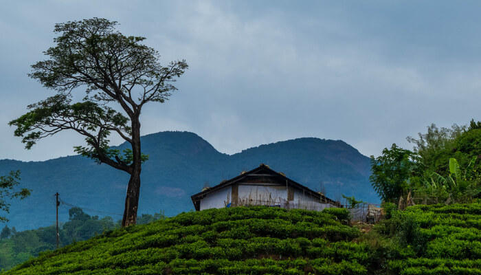 Wayanad - Misty, Scenic and Attractive