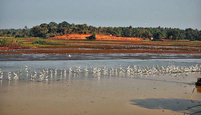 Best time to visit Thrissur