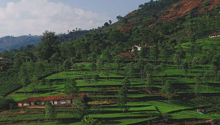 Kotagiri – Offers Stunning Views