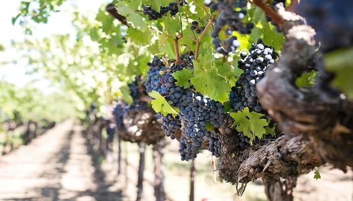 Quails' Gate Winery