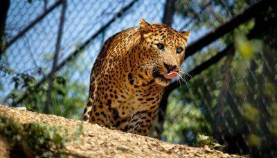 Debarigarh Wildlife Sanctuary