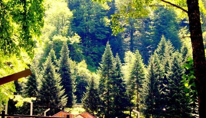 Amritvan Nature Resort