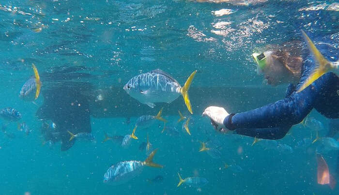 Snorkeling experience in Phuket