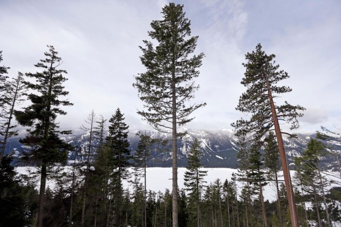 Nature Conservation TNC Cluster Elm Central Washington Cascade