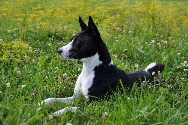 Dog's Body Language Mean