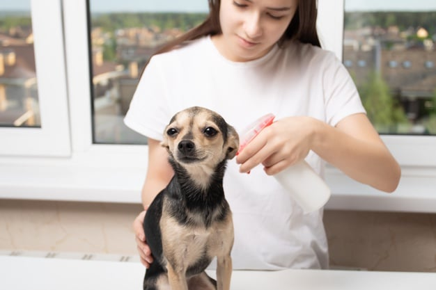 Naturally Prevent and Get Rid of Fleas on Dogs