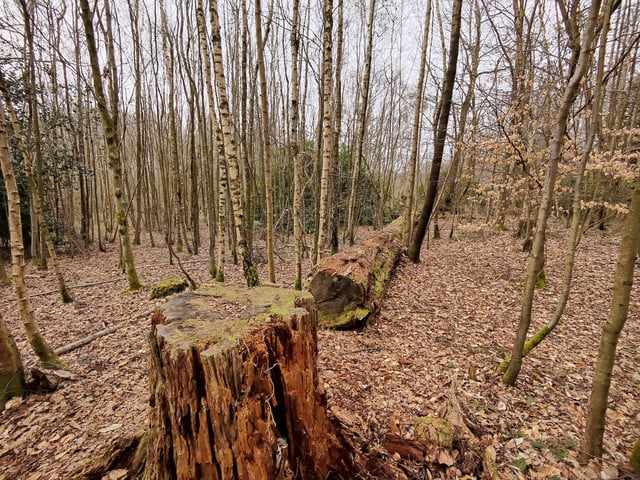 oneplus 9 pro review wide angle tree