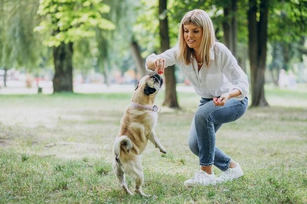 Pug Training Points