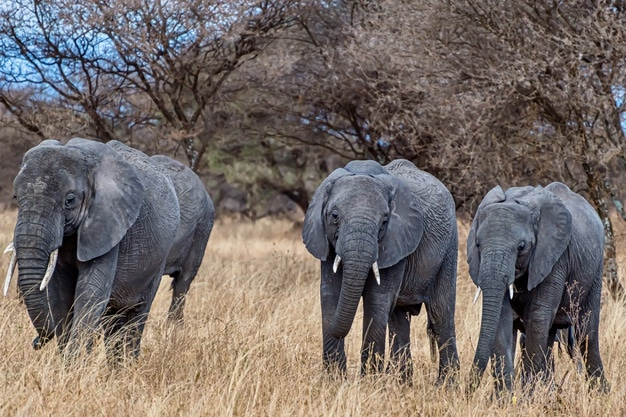 What Elephants Can Teach Us About Being Great Leaders